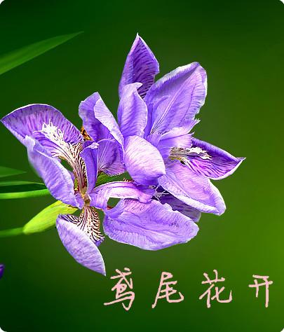 紫色花纹鸟蛋图片