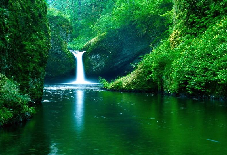 树叶画边-溪水林边 一叶绿 作品赏析 江山