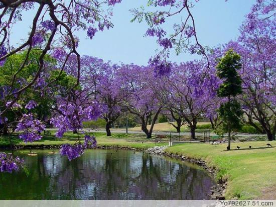 紫色抒情诗歌