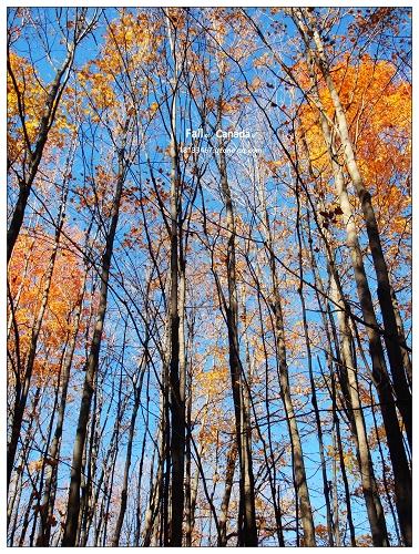 我踩在飘落有银杏树叶的石像路上,这就是明孝陵的神道,它曲