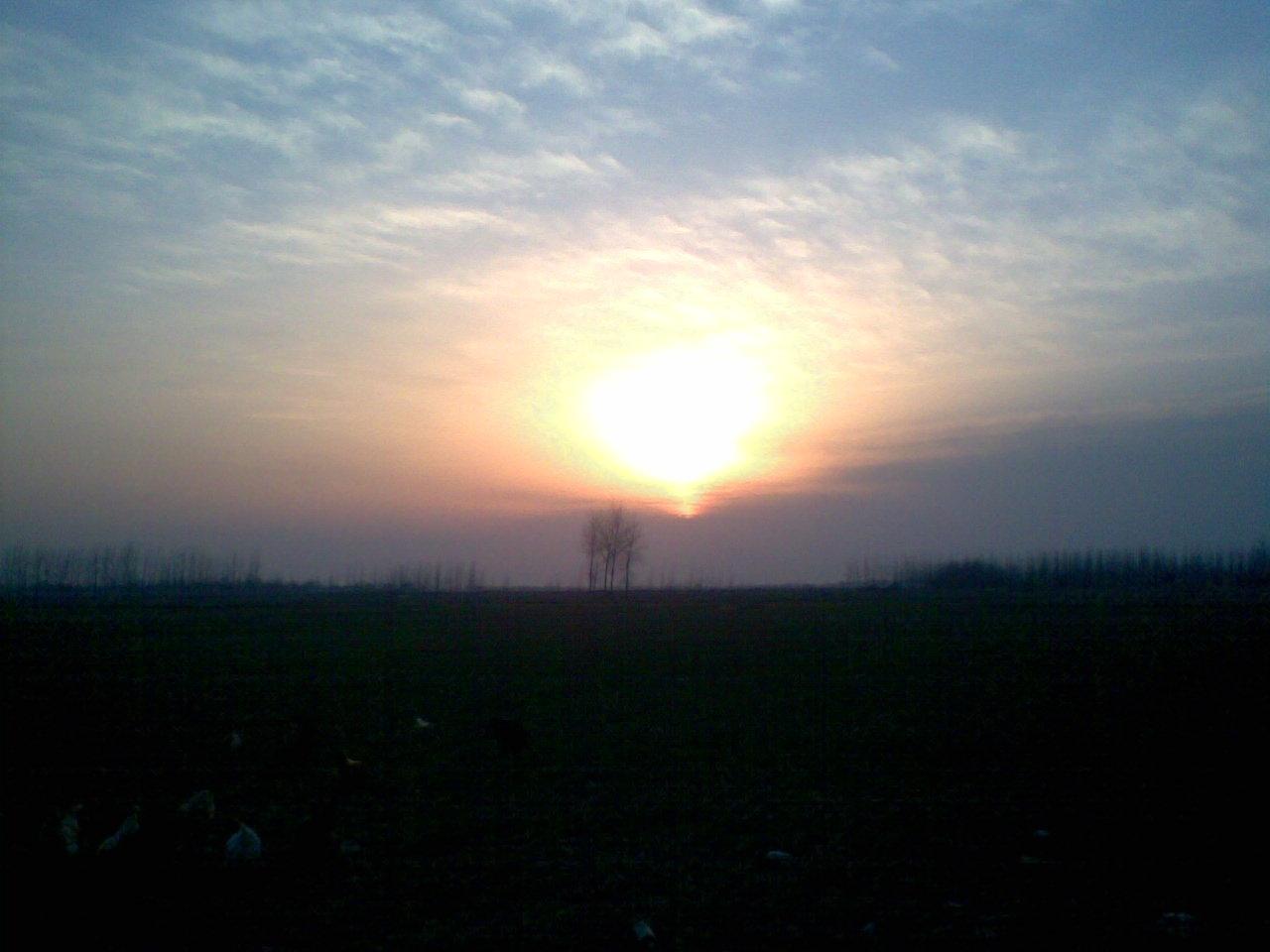 小树林 看夕阳