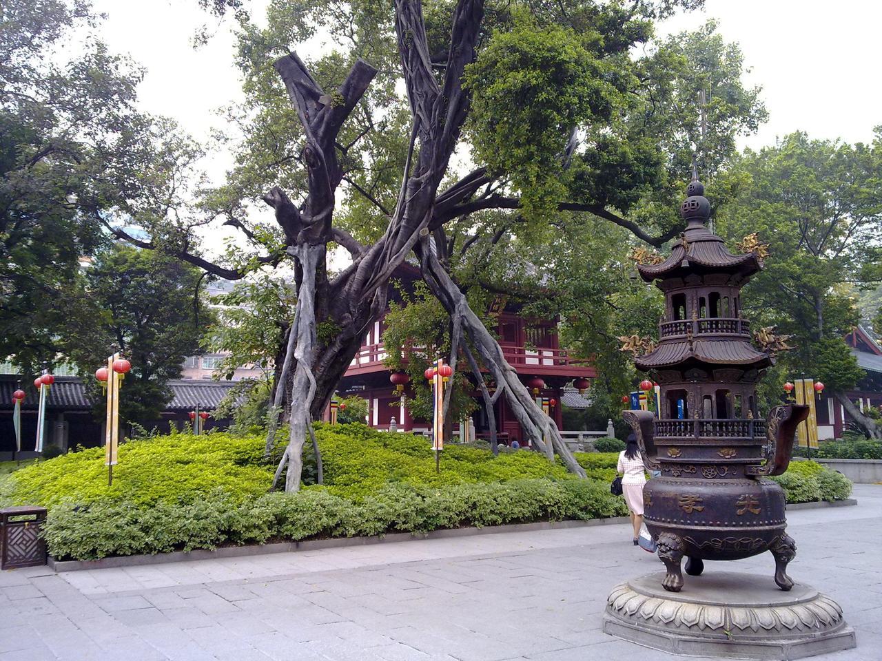 """唐仪凤元年,高僧慧能曾在该寺的菩提树下受戒,开辟佛教南宗,称""""禅宗"""