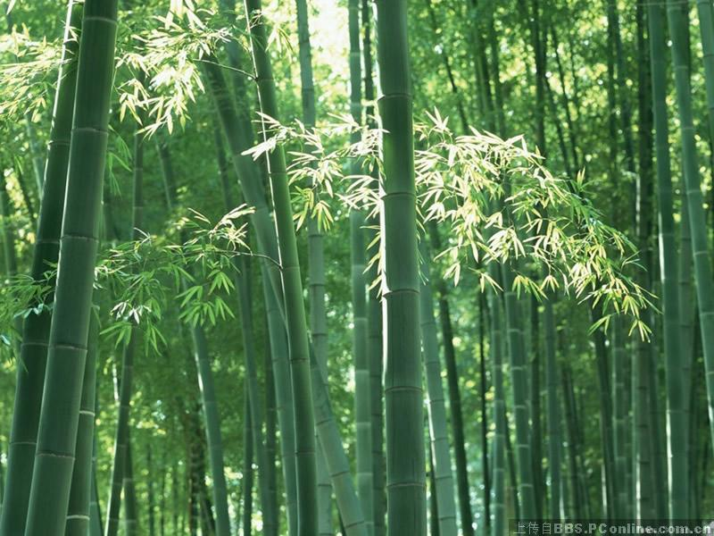极致竹林风景3d图