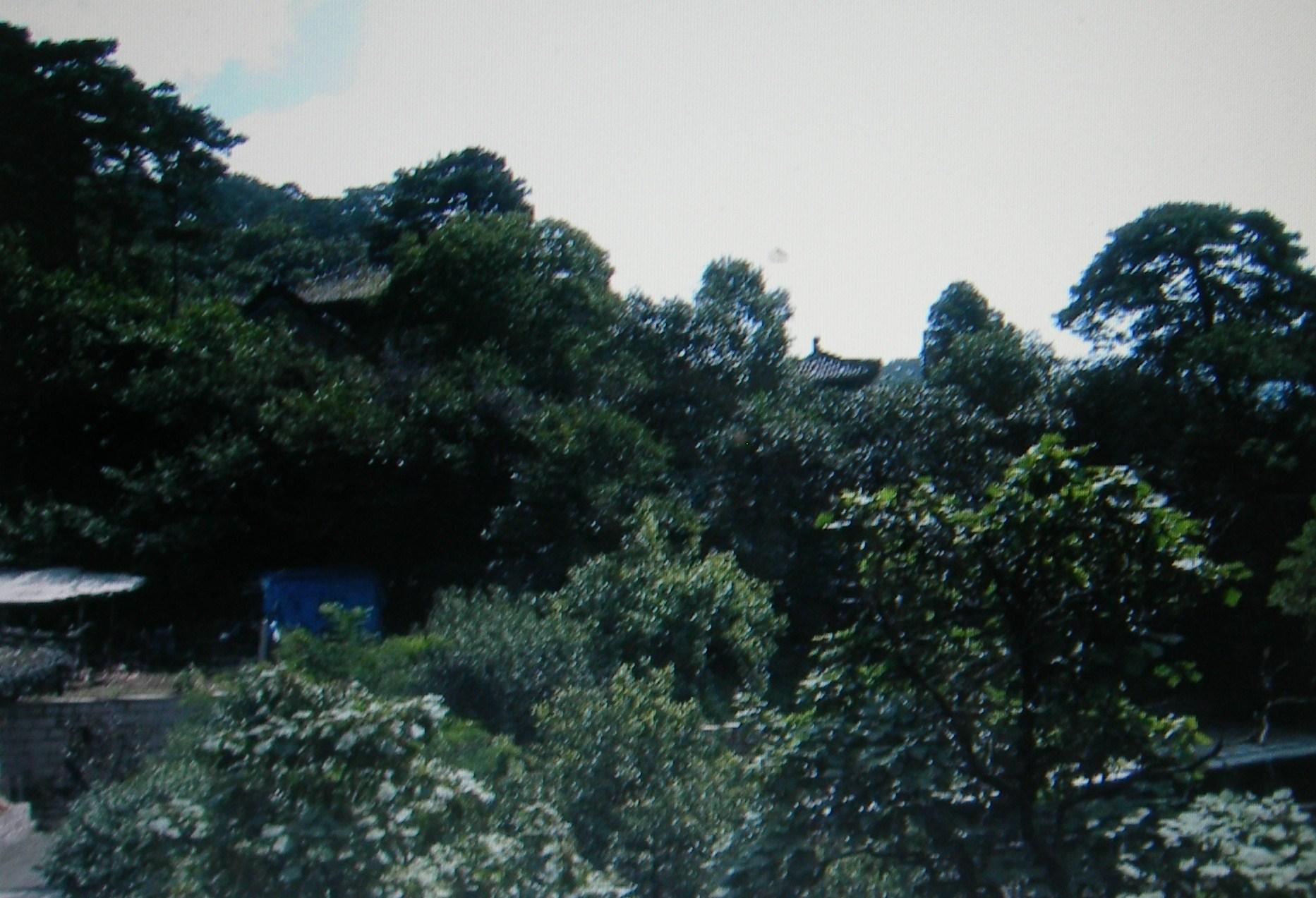 影月谷中型木材