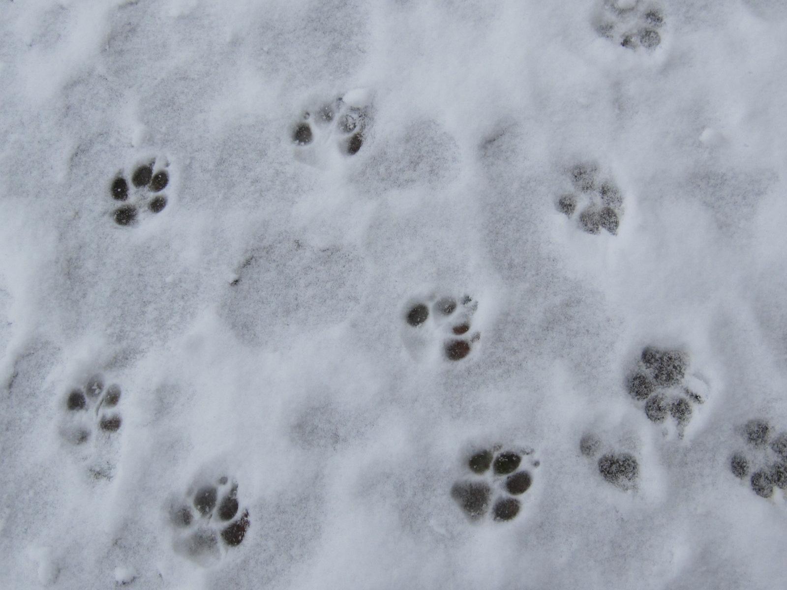 走雪中的脚印儿呀?