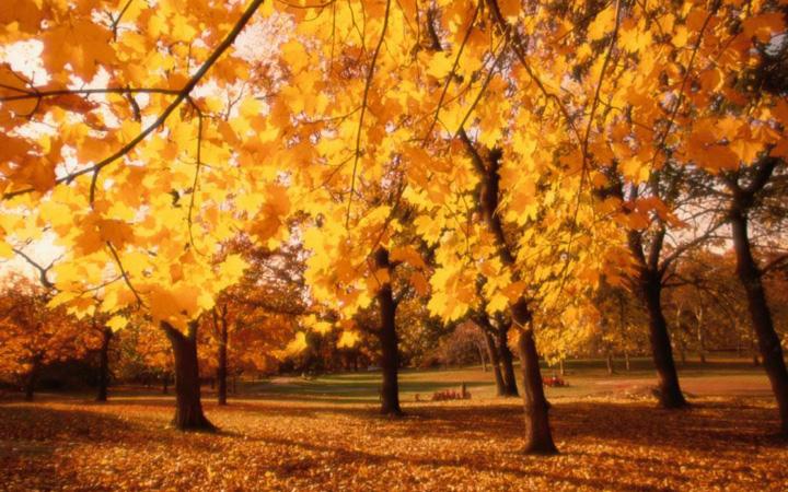 秋天唯美伤感风景图片