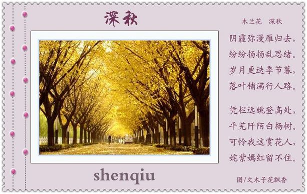 4004,深秋梧桐梦春生(原创) - 春风化雨 - 春风化雨的博客