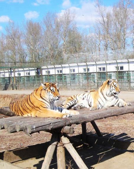 水彩风保护野生动物