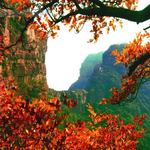 红叶风景图片头像