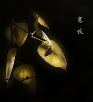 【酒家*诗歌】孤悬在冬天梅枝的一滴泪