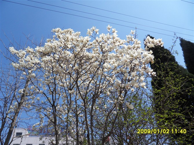 和树木春天有关的诗句
