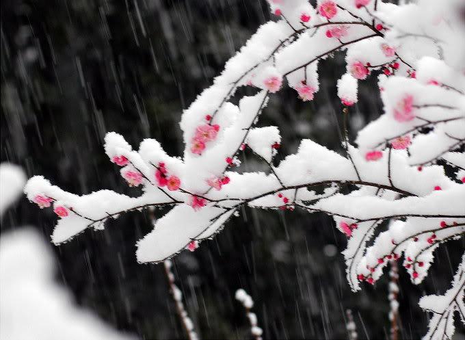 5195,情在冬天,韵在雪夜......(原创) - 春风化雨 - 诗人-春风化雨的博客