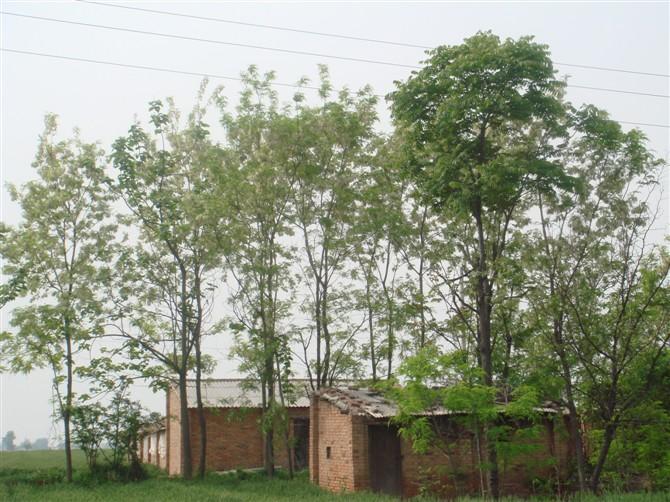 幼儿园主题墙手掌树
