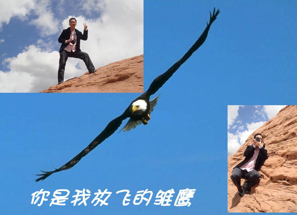 你是雄鹰在翱翔歌词_夜晚翱翔雄鹰的图片,雄鹰翱翔,雄鹰翱翔壁纸_大山谷图库