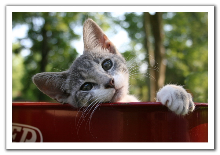 壁纸 动物 猫 猫咪 小猫 桌面 720_507