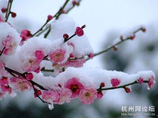 唯美的雪中梅花图片桌面壁纸下载1图片