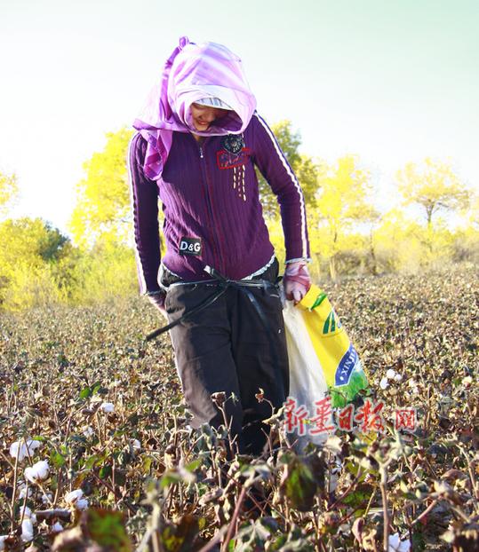 摘棉花的小女孩_江山文学网
