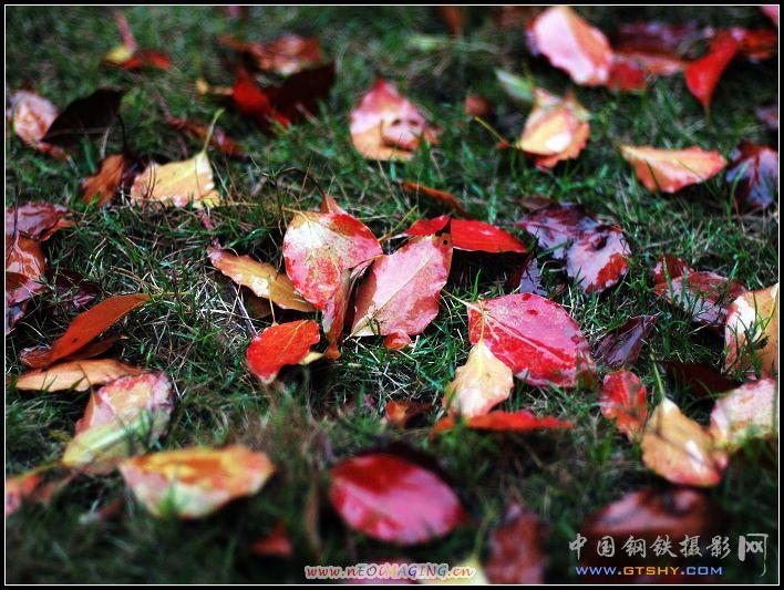 扬州的银杏树便是在秋天才显尽了风头