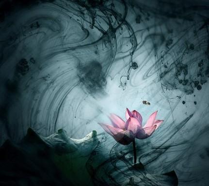 【江南散文】清明雨上,折菊寄到你身旁