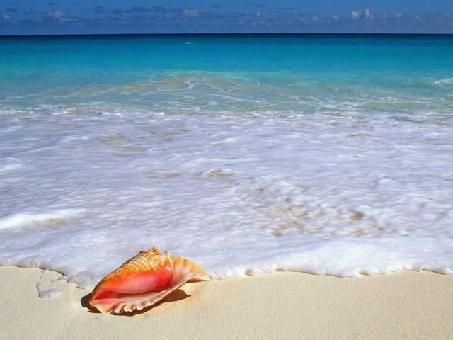 青岛海边贝壳鱼虾