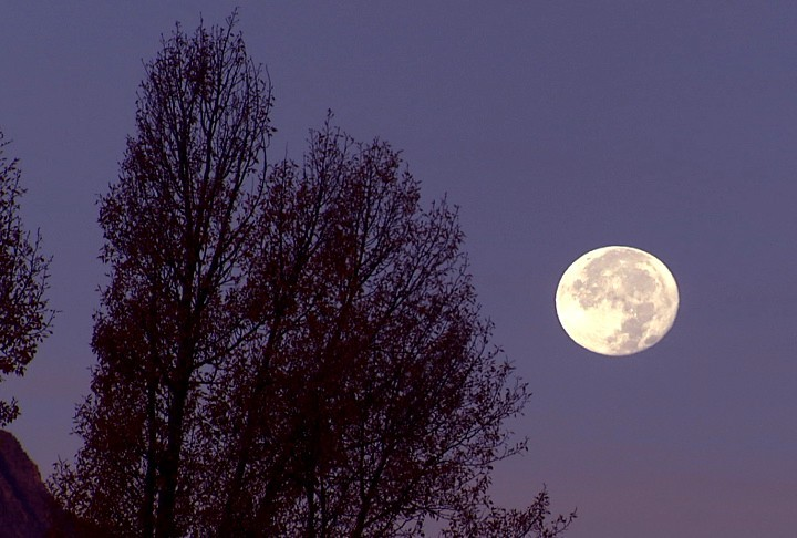 【我们在月亮面前达成共识】       风声寂静。你在高处    稳稳地站着。放飞影子,浮动与水面    你还在屋檐的青苔下,埋藏句号,密码    或者咒语。等我的一亩三分地沦陷    等我把灯火和夜色    装进陈年的陶罐,把梦里的光景酿成烧酒    等我在你的弥望中,比雪亮的刀子更疼    当你说出:上天用一轮明月把人间布置成天堂的模样    我们就会在另一缕月光下达成共识       2013.