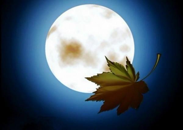 太阳爸爸月亮妈妈歌词