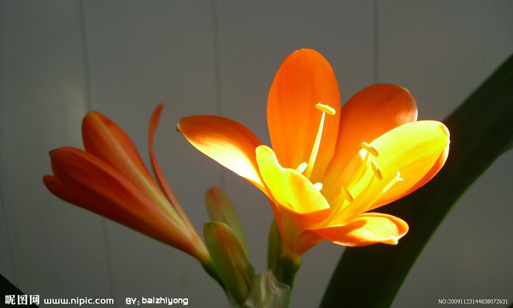 口布动物折法图解杯花
