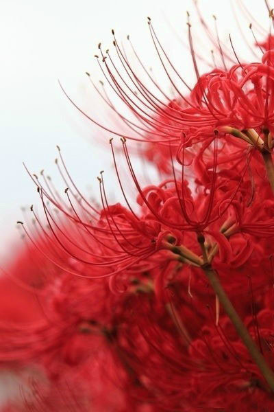 红色喷墨背景素材