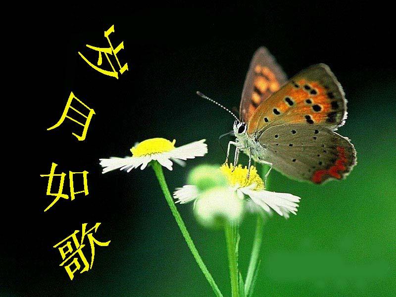 【关于蝴蝶的散文】