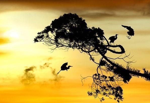 1、秋天来了       此岸到彼岸    隔着一本书的距离    读不懂,秋天就来了    井底喷薄的思念    一浪比一浪高       心事爬上星星    视线朝着你的方向流浪    最灿烂的风景已经哭瘦    夏天走丢了       月亮累弯了腰    佝偻的影子比昨天长    一株结着幽怨的丁香    以虔诚的姿势张望    爱情奔跑的弹道       2、忘记       擦干泪,喝下忘情水    从此不问咫尺天涯有多远    不再涉足,风花雪月    饿瘪了的爱情    守着冰山雪莲独住
