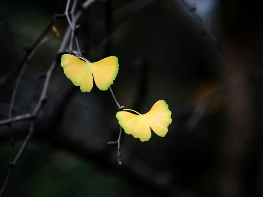 蝴蝶,两只蝴蝶:    一只粉红色,一只水晶蓝    在暮年    在两座