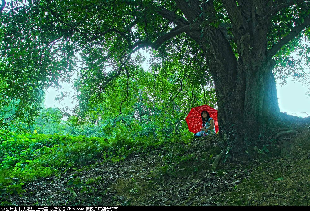 赵老汉门前有一颗高高的桂花树,每年八九月份的时候,远在十里之外就能闻到一阵清香。而这棵桂花树更是远近闻名,附近村子的许多人都会跋山涉水的来到赵家采桂花,有的游客甚至不远万里也要前来这个号称神树下,拜上一拜。赵老汉一家,也因为有了这棵桂花树而出名。    有的人来这棵树下定情,有的人来这棵树下许愿,还有的人来这棵树下赏花。人们都说赵家有了这棵树,便是有了一个聚宝盆。不用出去干活,坐在家里都能收钱。这话说的倒也不假,这棵树确实给赵老汉带来不菲的收入。然,每次赵老汉独自一人坐在院子里,望着桂树