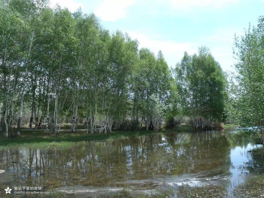 桦林公园,一进大门,就被里面的的风景吸引,各种树木清清爽爽的矗立
