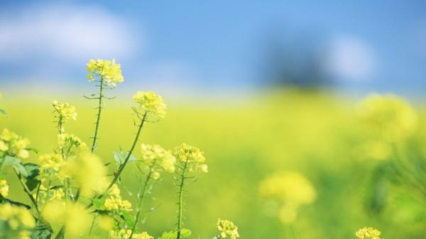 春天 小溪手绘背景