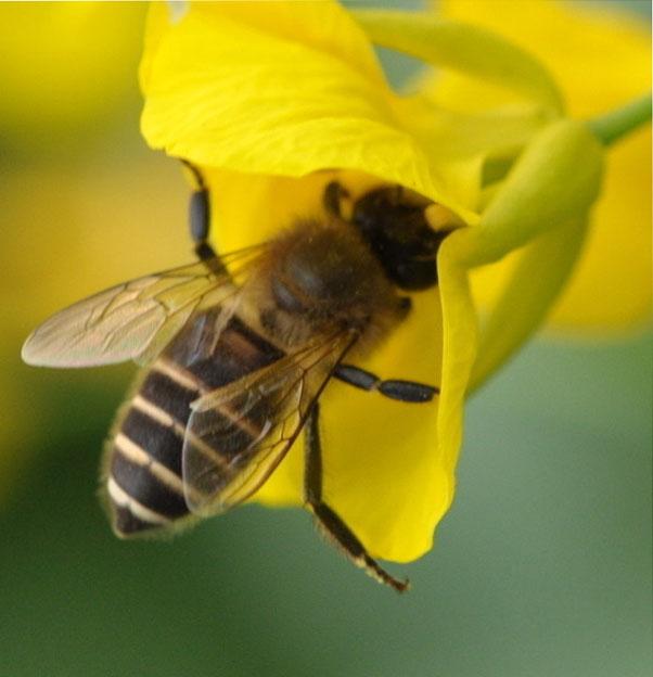 鸣蜂驱动电路图