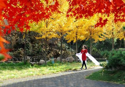最美秋天果子风景