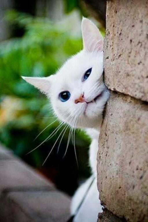 壁纸 动物 猫 猫咪 小猫 桌面 512_770 竖版 竖屏 手机