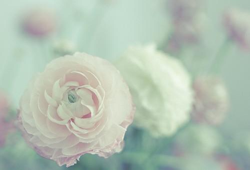 日记手绘超简单花朵