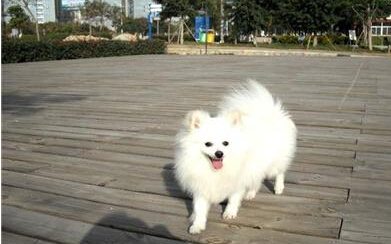 吃着馒头,我觉得我是天底下最幸福的一只狗.图片