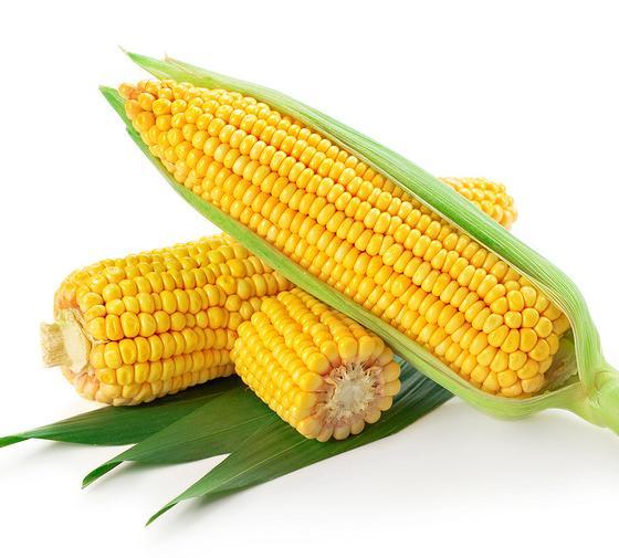 今年青城的夏天,连续几天的高温,热得跟火炉似的。我坐在吹着空调的办公室里,正吃着粘玉米,细嚼慢咽,充分品尝着粘玉米带来的惬意,满嘴甜滋滋的,很是享受。这时,我看到在老家的朋友高希日莫在微信圈里说,老家天旱的,玉米叶子都卷卷了,并附了一幅照片。    我看了心里一紧,知道这个时候,大姐一定在老家的玉米地里忙着,虽然她住在城市的郊区,可是她从来没有忘记自己是个庄稼人。    我给大姐打了个电话,刚叫了一声大姐,就听大姐在那面说,老爹,你儿子来电话了。听见父亲嘿嘿地笑几声。姐大声说,我过来玉米地看看,浇遍水。