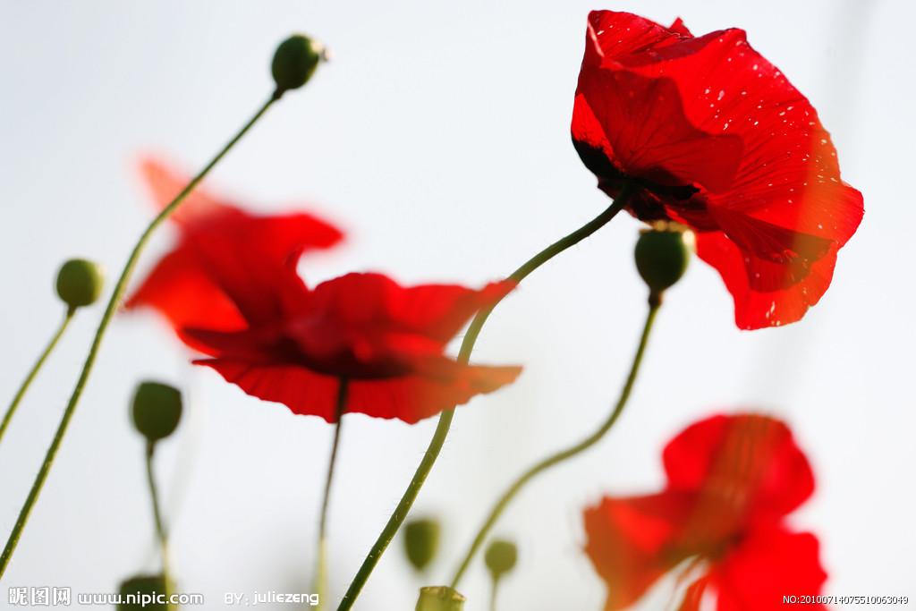 我和他胸前各扎一朵大红花