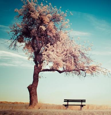 柳树和月亮的图片