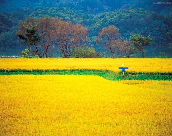 说出农村风景画词