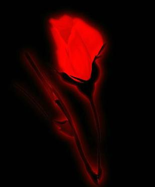 【天涯征文】晚安,玫瑰(小说)