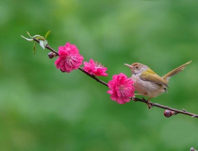 【八一】听春(散文)
