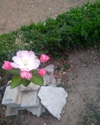 【看点·光】一朵花开,一家安暖(散文)
