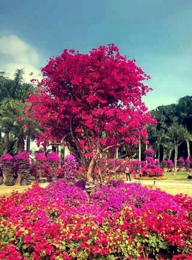 谁都渴望,生命如花一般盛放    不管在哪个季节,只要远播清芬    不管怎样的颜色,只要爽心悦目    不管在什么地方,只要展示自己的风景       汪峰说:我想要怒放的生命    而我说:我想要生命像怒放的花朵    或许不是满树血色的杜鹃花,就是    独自盛开的山野花,未尝不可    谁说过,生命只是单一的样本呈现       有时我觉得凤鸣兄就是那树红杜鹃    饱满的生命,几十年蓬勃在第一线    攻克过无数的人生难关,仍有笑颜    面见过无数的财富首脑,不卑不屈    生命的罅隙,用生