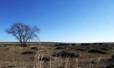 【心灵】乡野的冬天(诗歌)