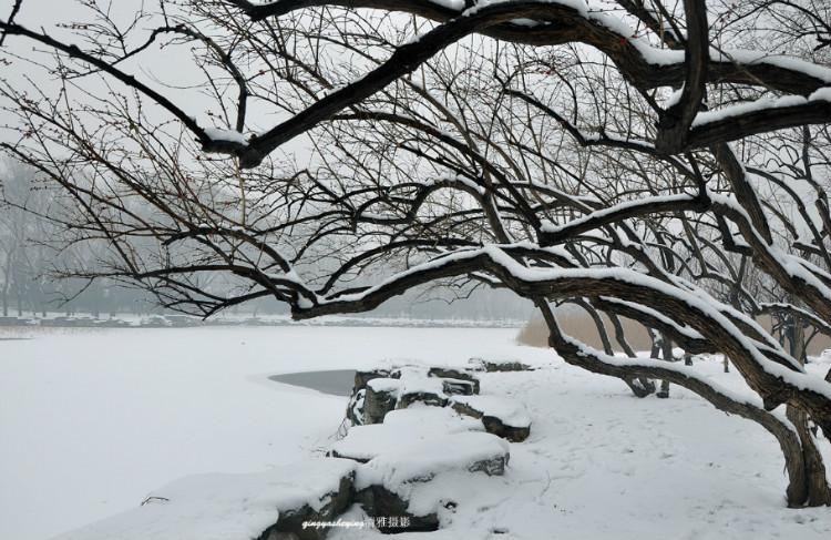冬天挂白籽的风景树