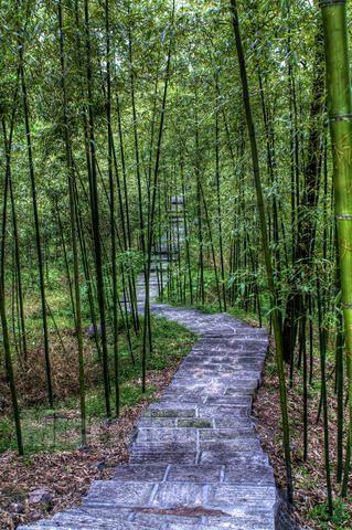 风景笔画简单竹子